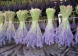 Як самостійно засушити квіти і продовжити їх красу?