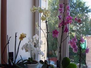 Як доглядати за домашньою орхідеєю