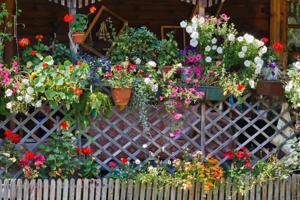 Квіти в контейнерах прикрасять будь-який паркан