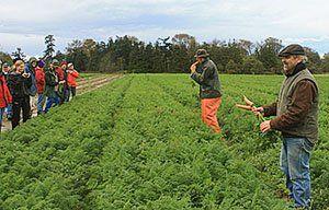 Хороший урожай ранньої моркви