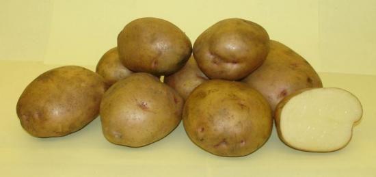 Як вибрати посадковий матеріал картоплі?