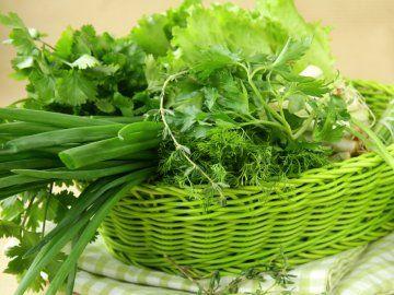 Вирощування зелені на продаж