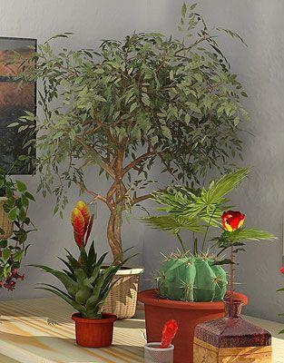Як виростити кімнатну рослину з насіння?