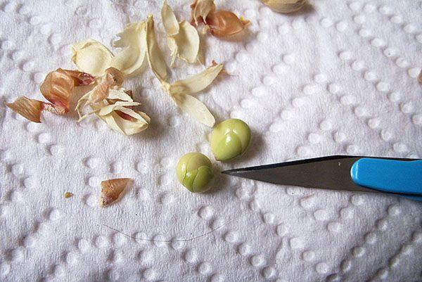 Очистити кісточки від щільної шкірки