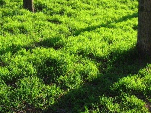 нерівний газон