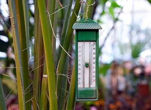 Термометр, зимовий сад