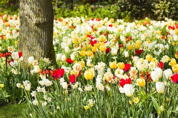 Які рослини можна садити під деревами