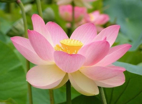 Які садові квіти найпопулярніші?