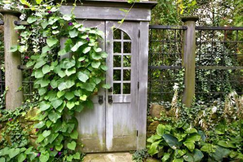 Які вибрати плетуться рослини для саду?