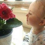 Яким рослинам місце в дитячій кімнаті