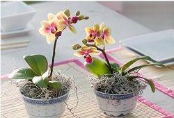 Як організувати догляд за орхідеями?