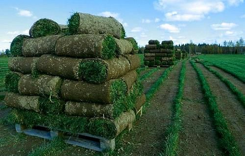 свіжо зрізані рулони газону