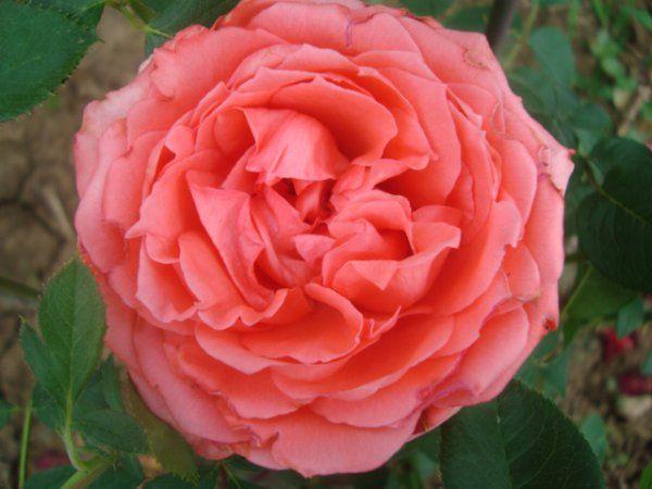 Захоплення квітами - найпрекрасніше хобі на землі
