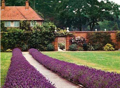 Сад на даху