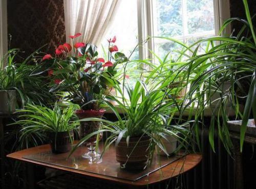 Кисень для кімнатних рослин: необхідна умова життя