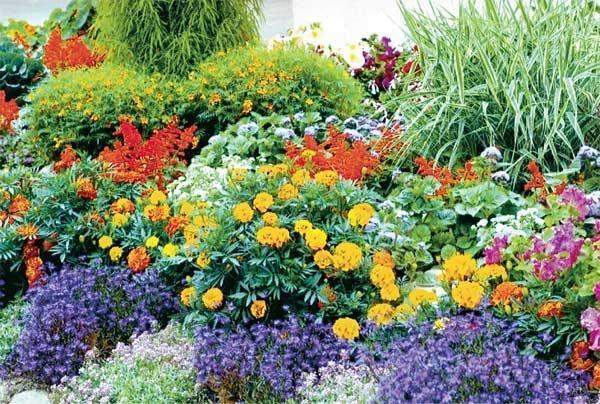 Клумби безперервного цвітіння: нев`януче прикраса саду