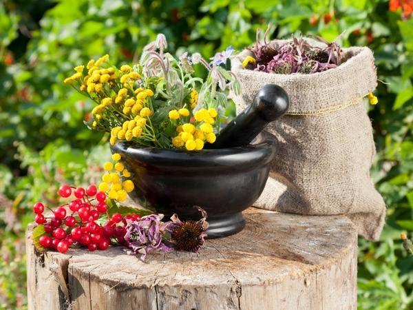 Коли і як правильно збирати лікарські рослини