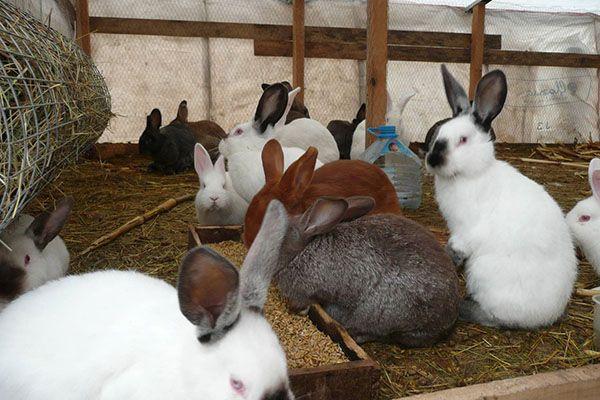 Вирощування кролів у вольєрі