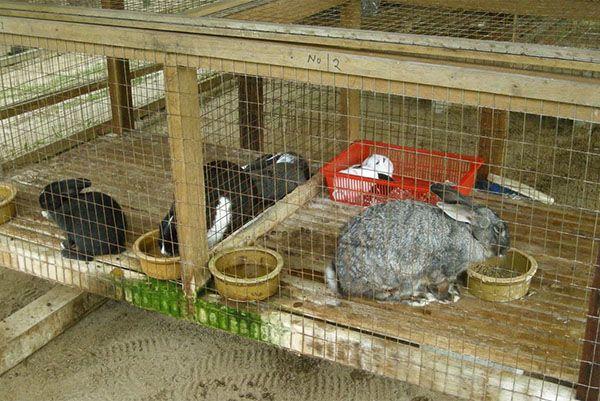 Комбікорм є важливою складовою в вирощуванні кроликів