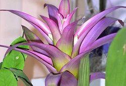 Кімнатні квітучі екзотичні рослини для фітодизайну