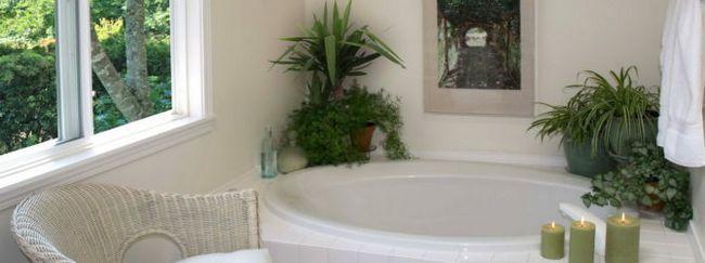 Кімнатні рослини для ванної кімнати