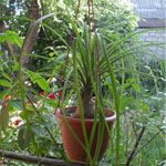 Кімнатні рослини на вулиці