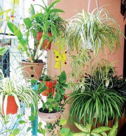 Кімнатні рослини потрібні не тільки для краси, а й для здоров`я