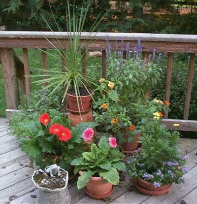 Кімнатні рослини на свіжому повітрі