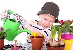 Кімнатні рослини в дитячому садку: як підібрати правильно?
