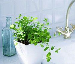 Кімнатні рослини у ванній