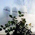 Кімнатні рослини взимку