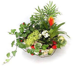 Композиції з кімнатних квітів