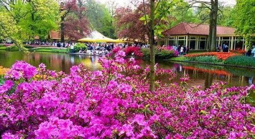 Королівський парк кекенхоф - перлина голландії