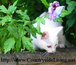 Кішка на дачі і в заміському будинку