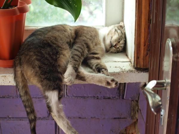 Кішки на дачі теж до удачі!