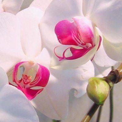 Догляд за орхідеями: основні правила та можливі проблеми