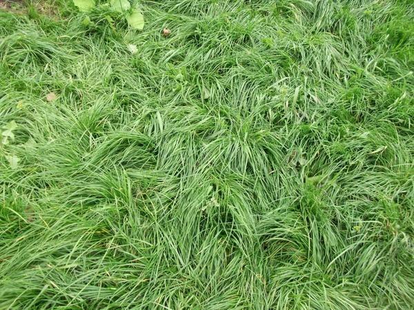 Кошлатий газон своїми руками