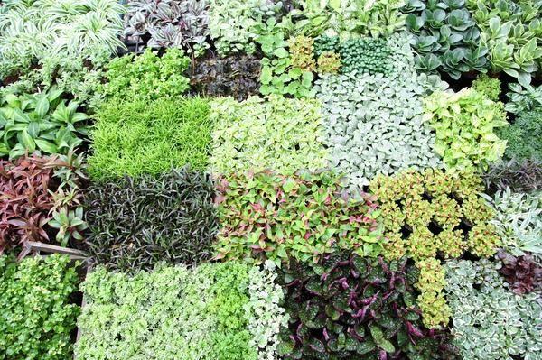 Гарний город і урожай весь сезон повторні і ущільнені посіви і посадки