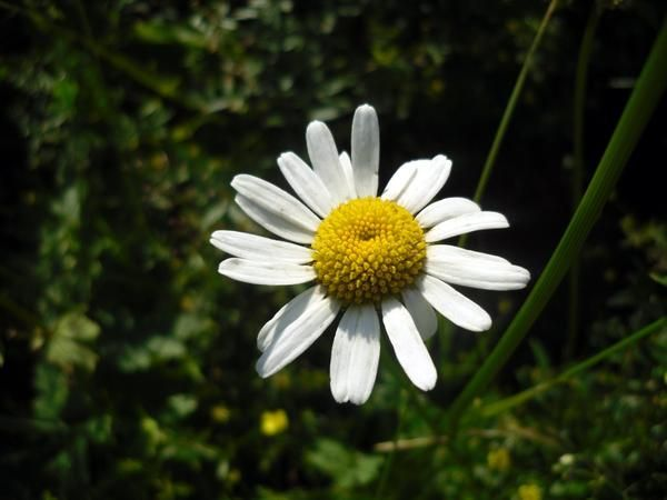 Перш ніж зірвати будь-яка рослина, слід було випросити благословення Матері-Землі