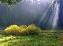 Ландшафт: поля і галявини - просторове мислення
