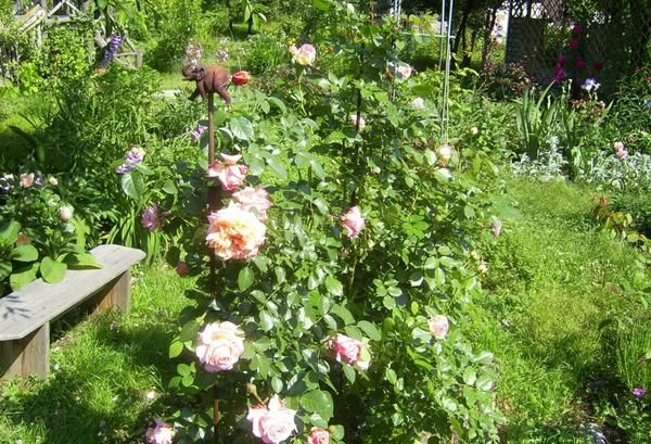 Лавочки, лавки, гойдалки, колодязь в якості декоративних елементів саду
