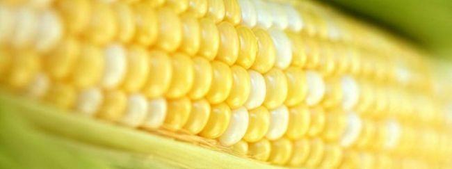 Лікувальні властивості кукурудзи