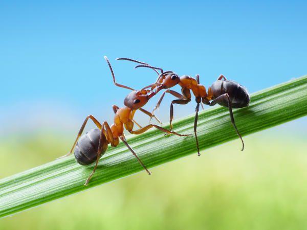 А ще комахи постійно годують і облизують один одного