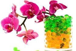 Квіти домашні: як організувати догляд?