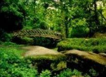 Лісовий сад - «берендево царство»