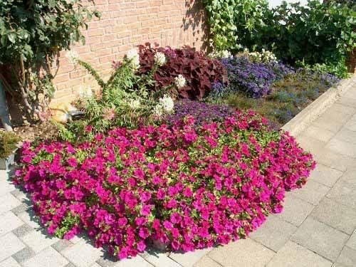 Літня квіткова мозаїка