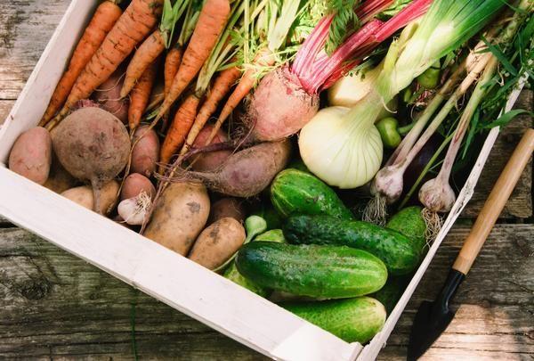 Кращі способи зимового зберігання овочів