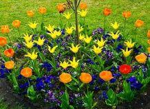Маленька клумба «родзинка» вашого саду