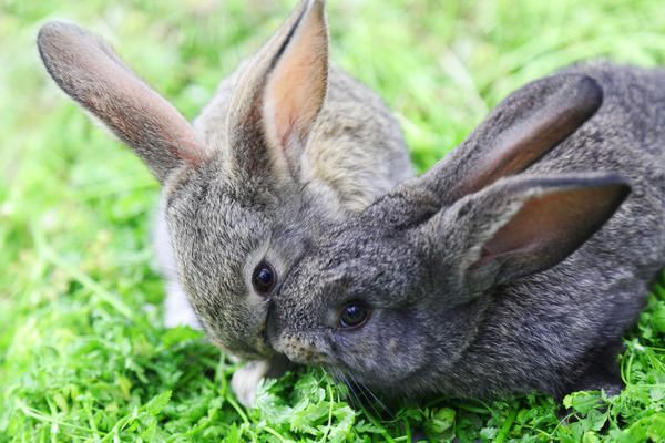 М`які і пухнасті: що потрібно знати новачку про розведення кроликів