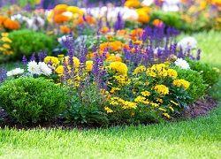 Багаторічні квіти для клумб, пахучі все літо